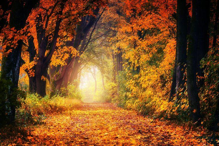 naturopathie signifie chemin naturel vers la santé