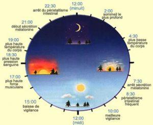 schéma chronobiologie